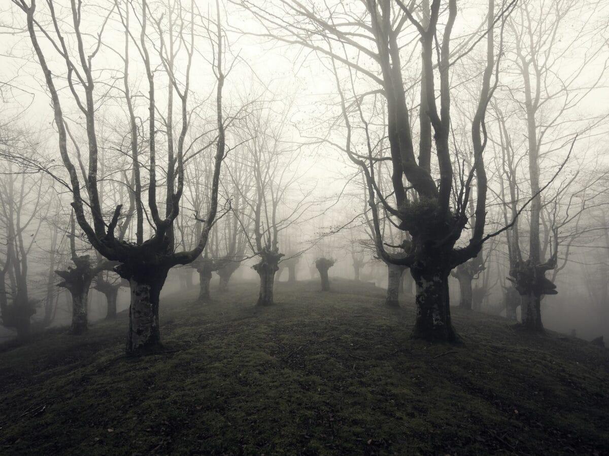 Wald Bäume grau