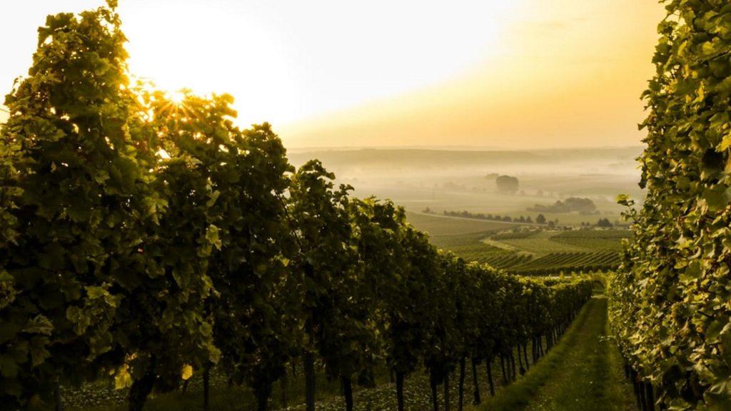 Weinwanderwege Weingut Hessen