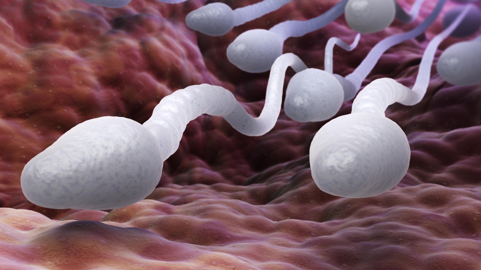 Sperma Alkohol