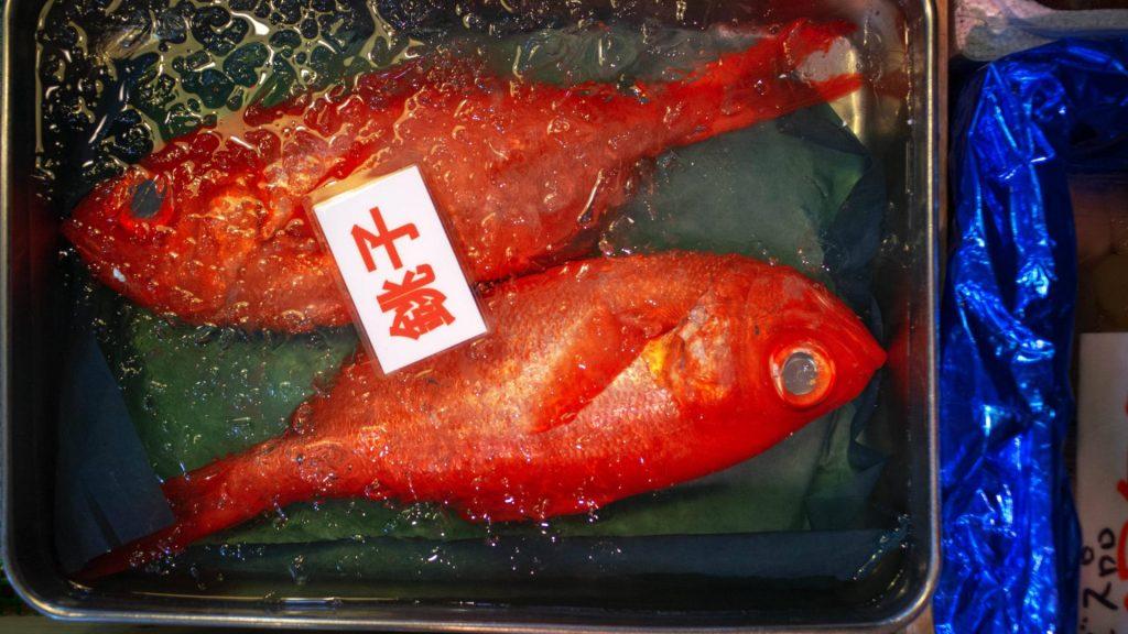 Fisch, Fischmarkt, Japan, Tsukiji Fischmarkt, japanische Küche, japanische Lebensmittel, japanische Ernährung