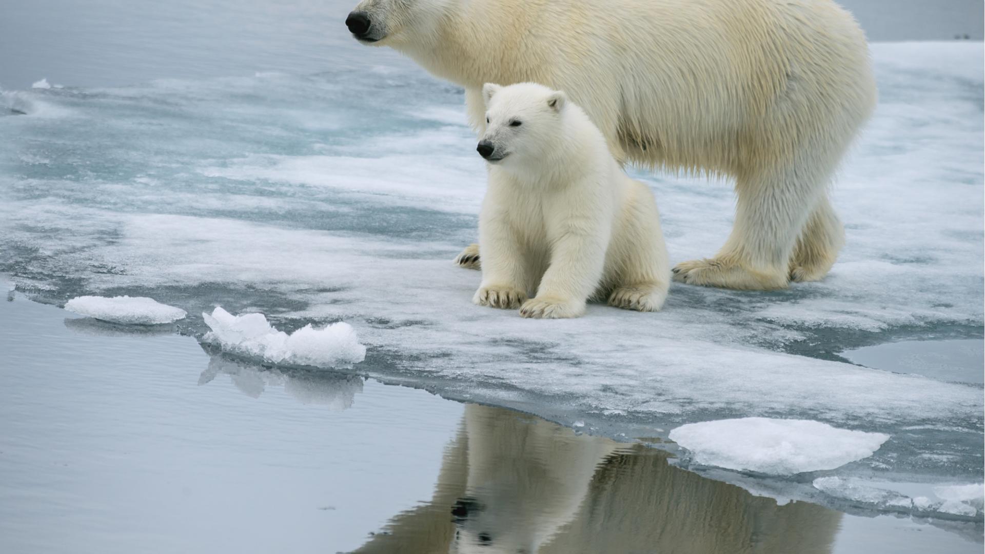 Klimawandel Mord