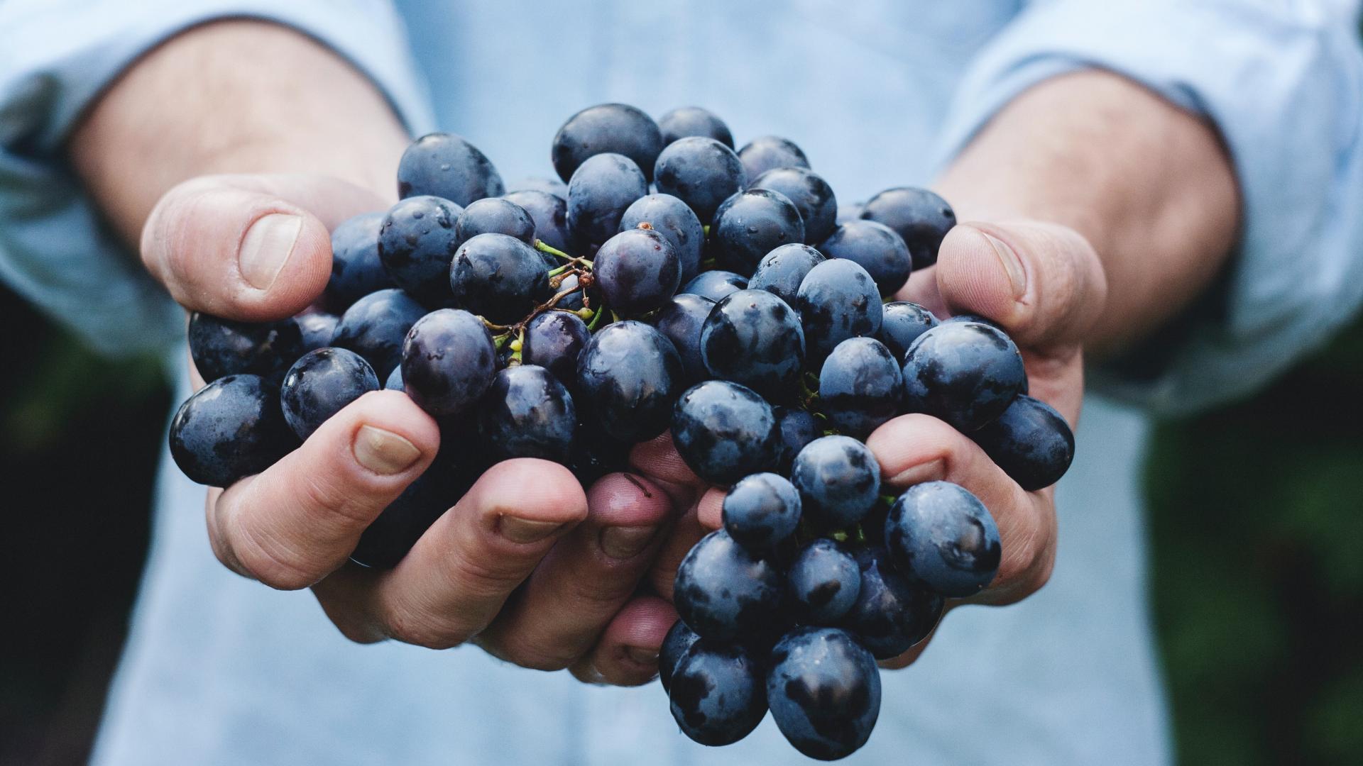Rotwein Trauben wein grapes hände