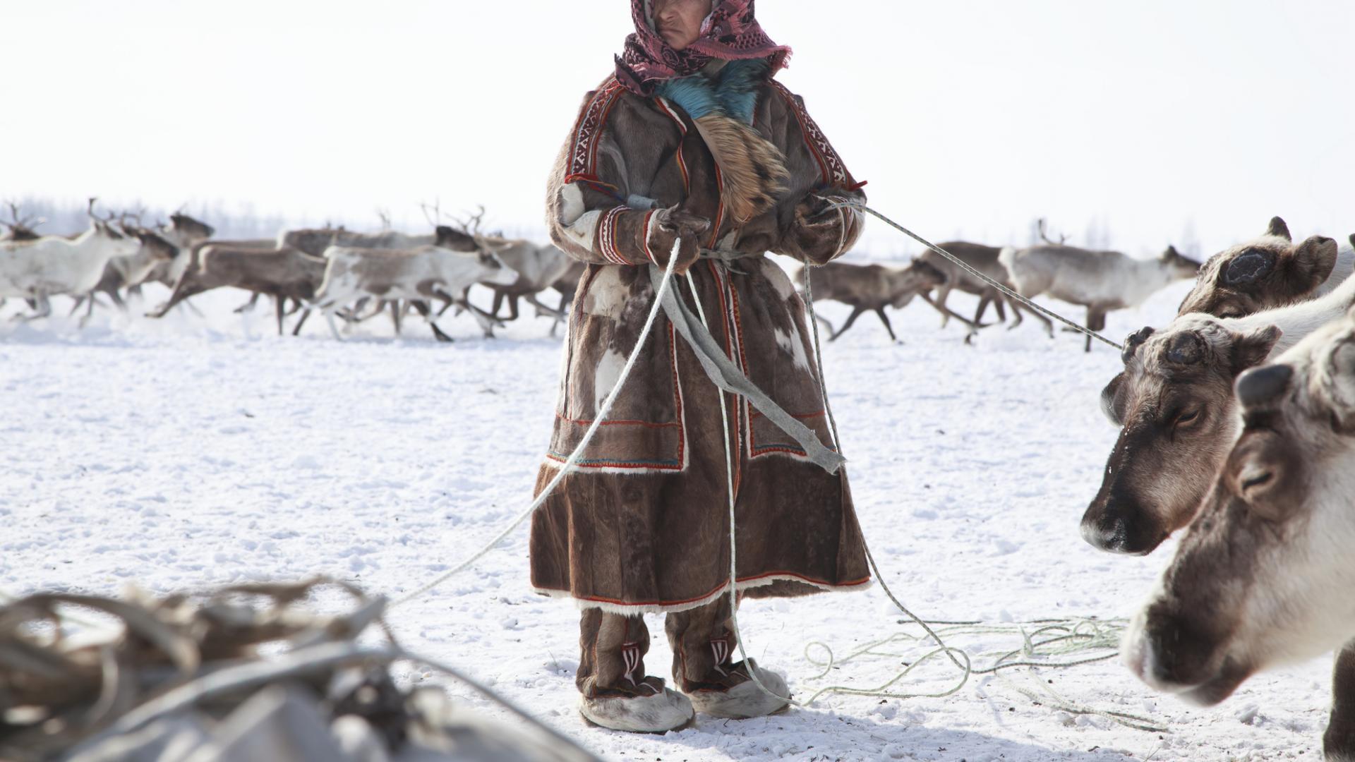 Inuit Rentiere