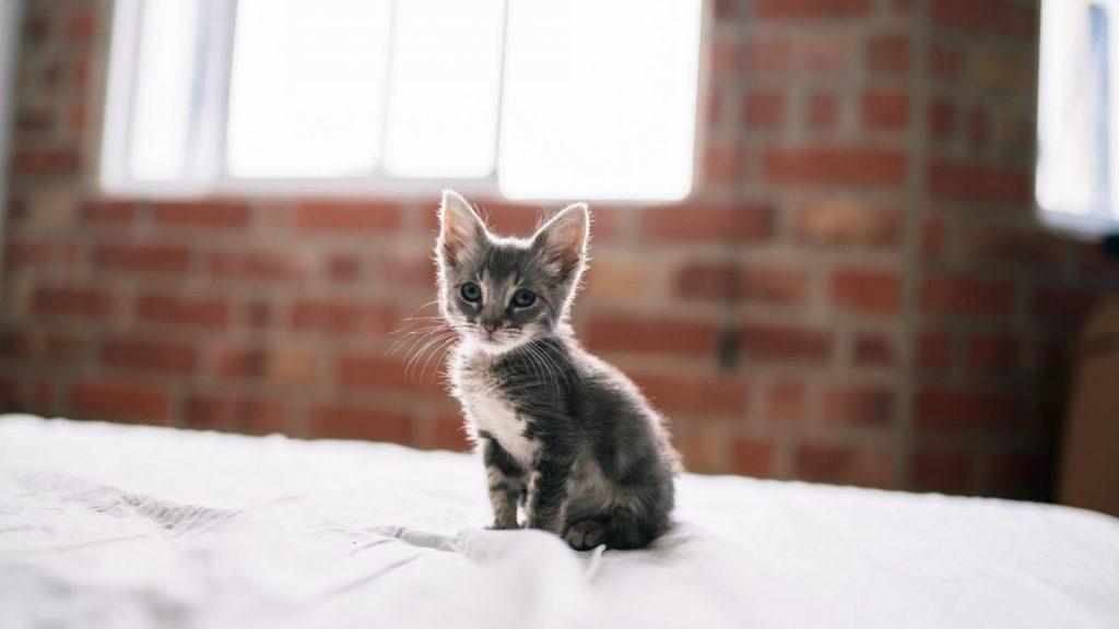 Corona-Katze, Katzenbaby