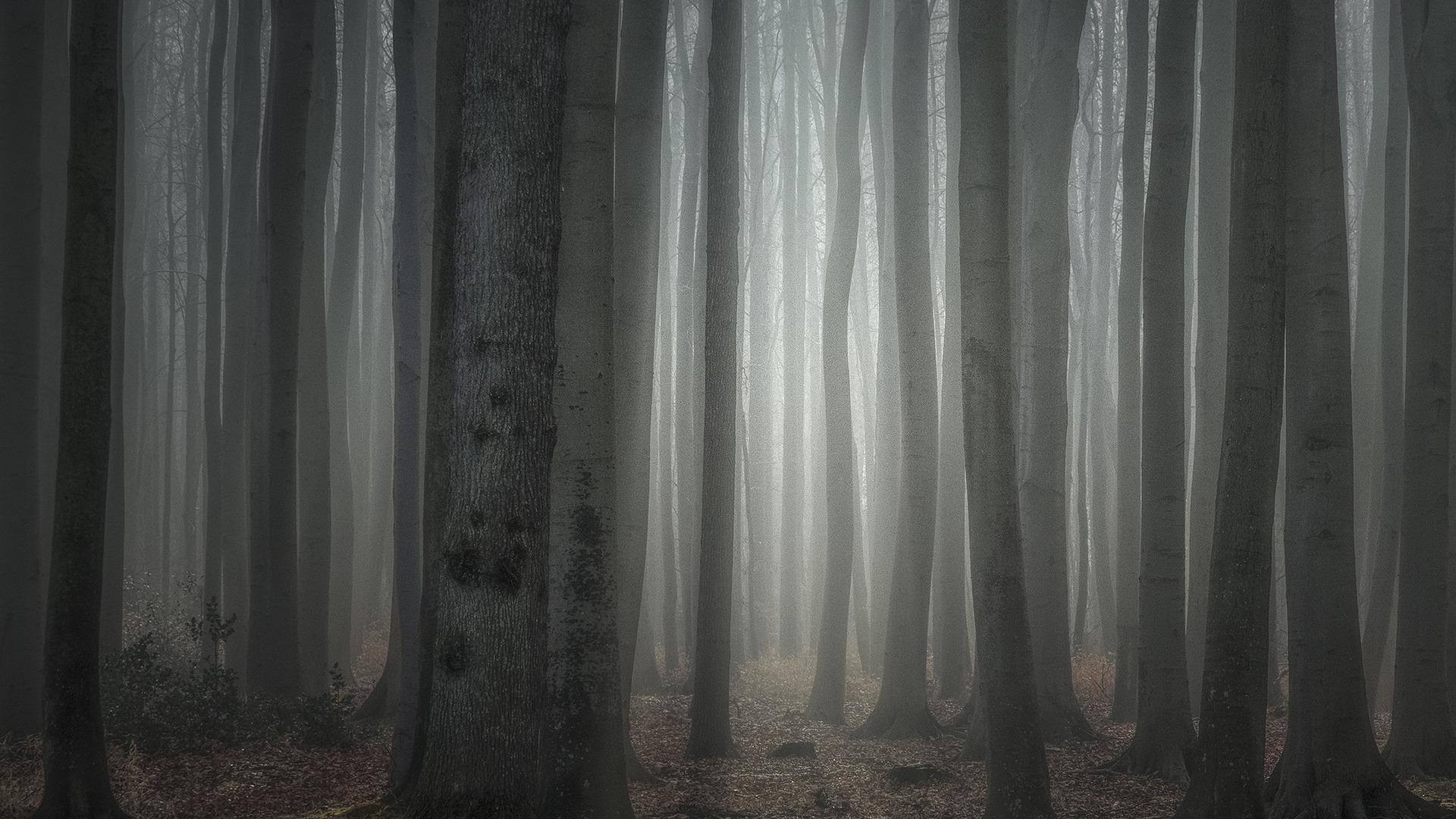 Gespensterwald Nienhagen