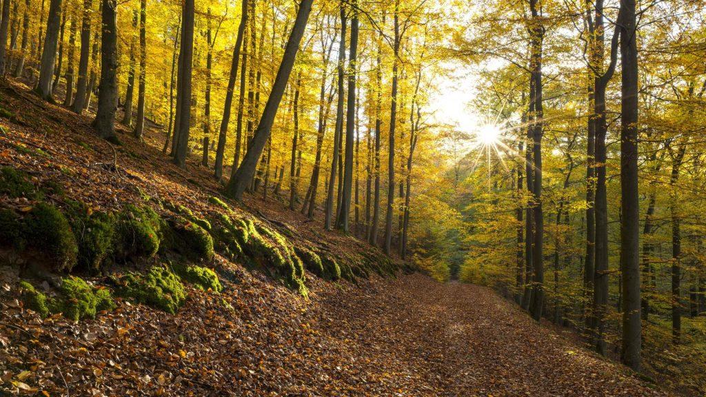 Nationalpark Kellerwald Edersee Hessen  herbst