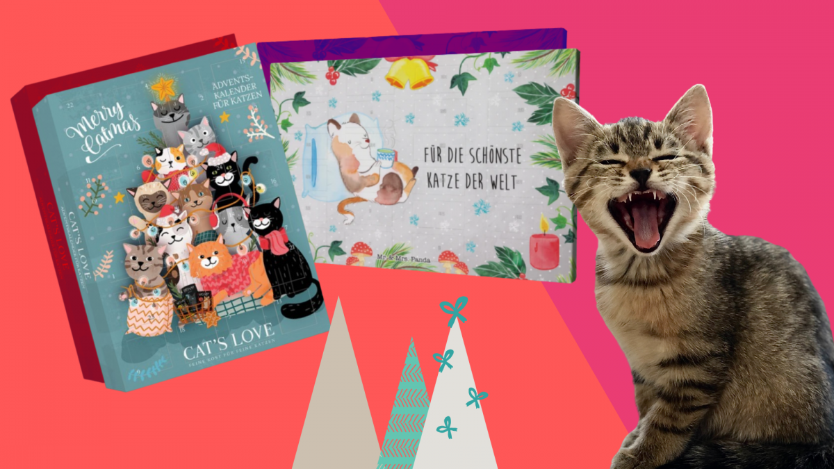 Adventskalender für Katzen, Teaser