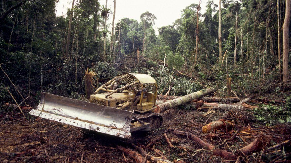 Amazonas wird abgeholzt und keiner bekommt es mit wegen dem Coronavirus