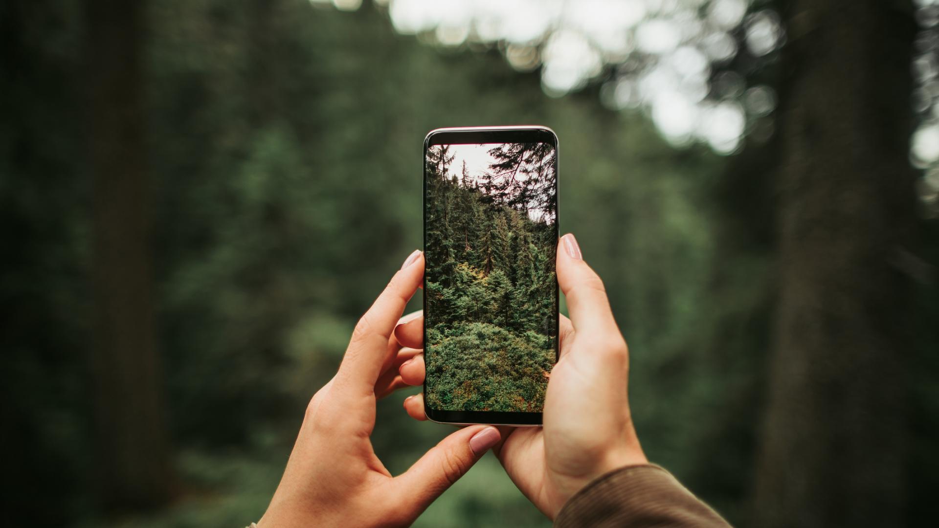 Frau mit Handy im Wald