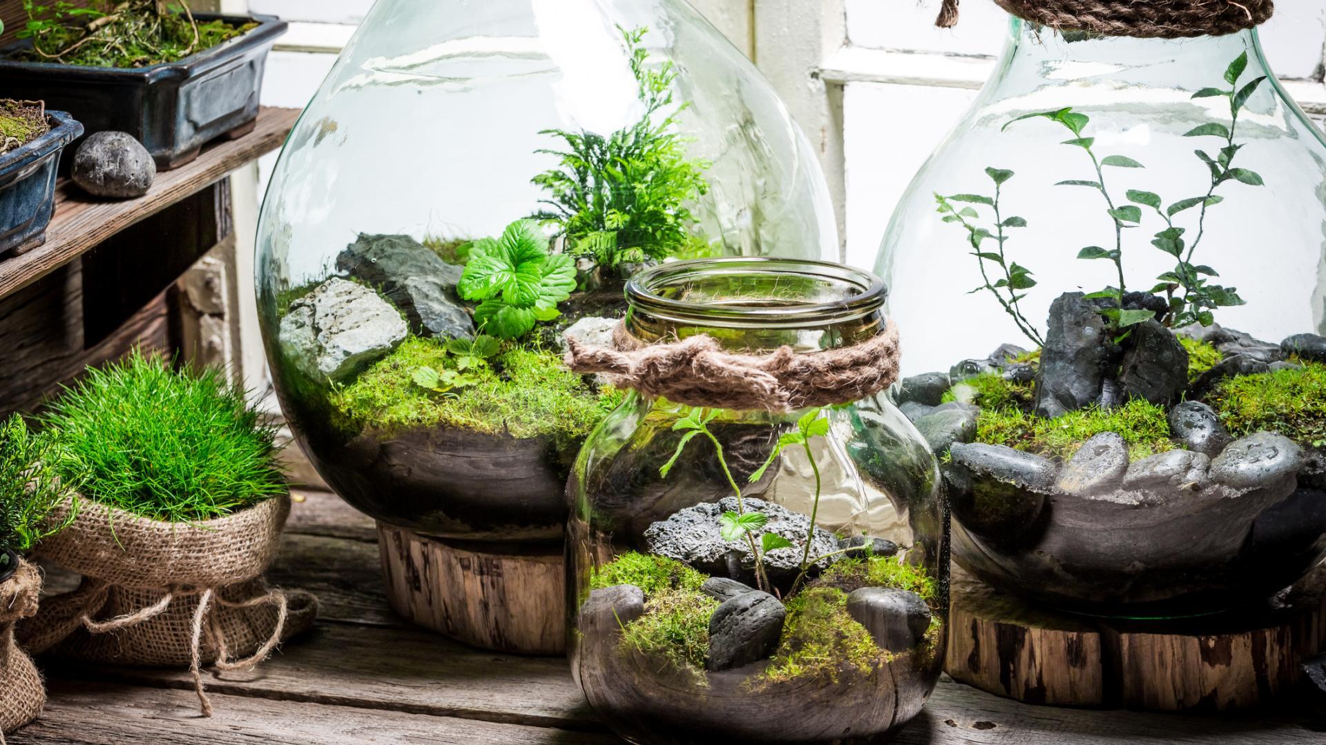 Garten im Glas Moss Farne