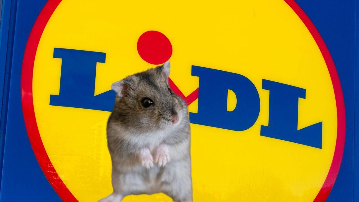 Hamsterkauf bei Lidl