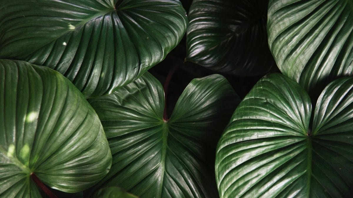 Palmenblätter Zero Waste