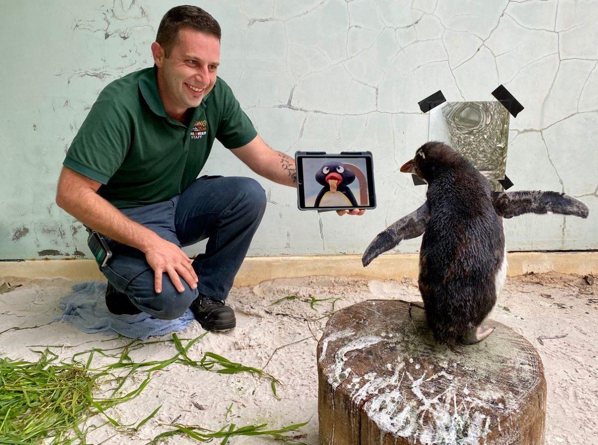 Pinguin guckt Tierdokus