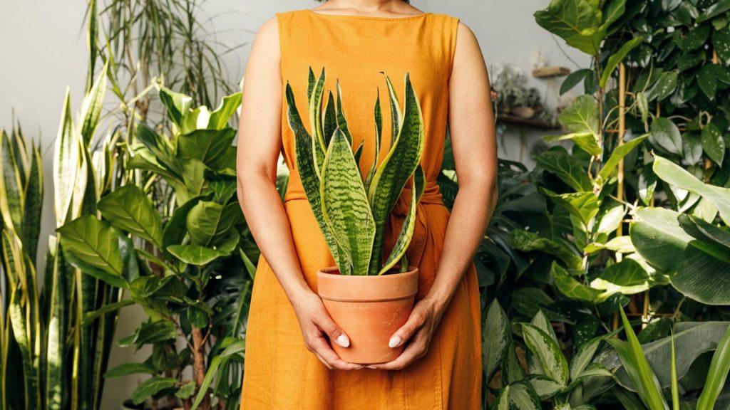 Unter der großen Anzahl an Zimmerpflanzen die pflegeleichten zu finden, ist gar nicht so leicht.