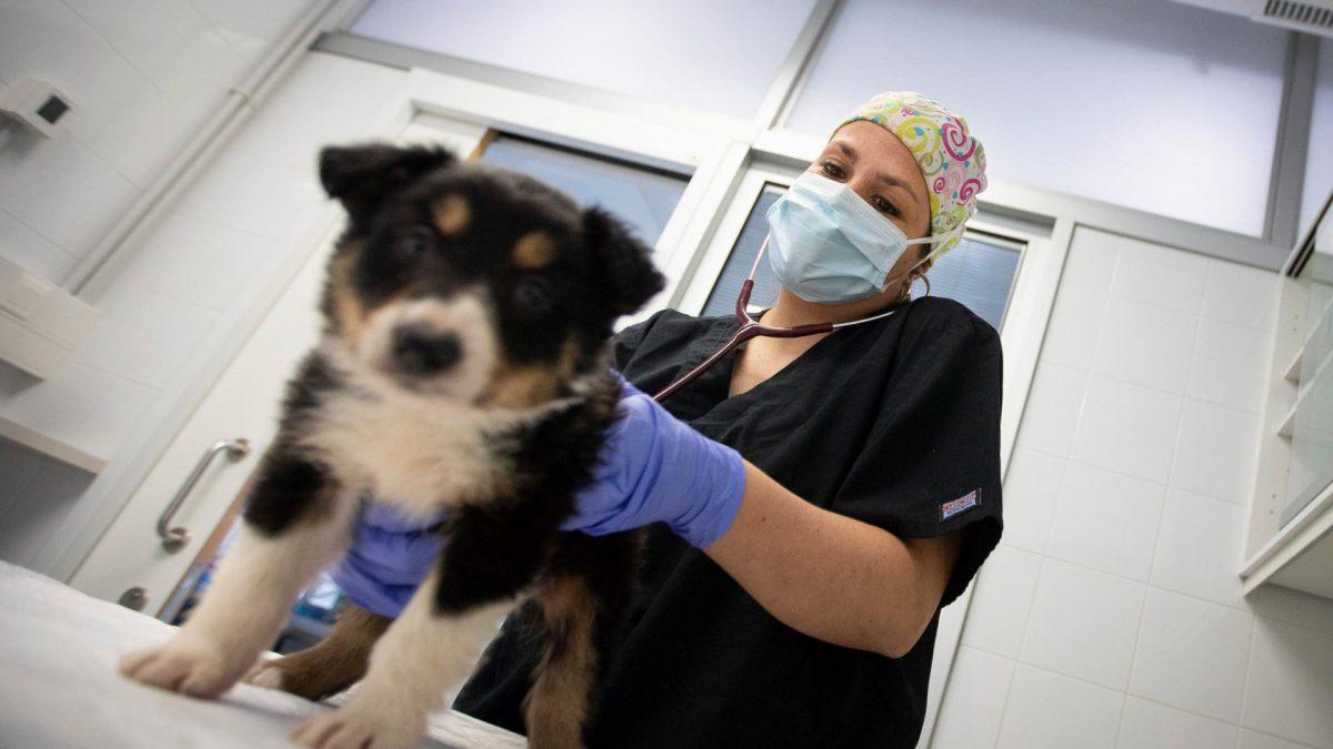 hund tierarzt corona