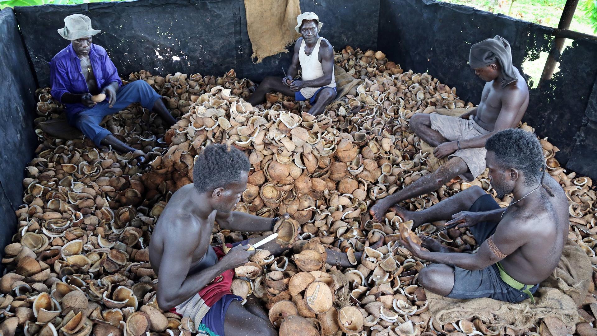 Bauern in Kokosplantage