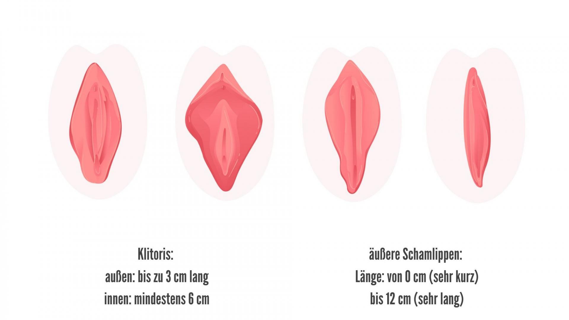 Vulven rosa, Größen, Vulva