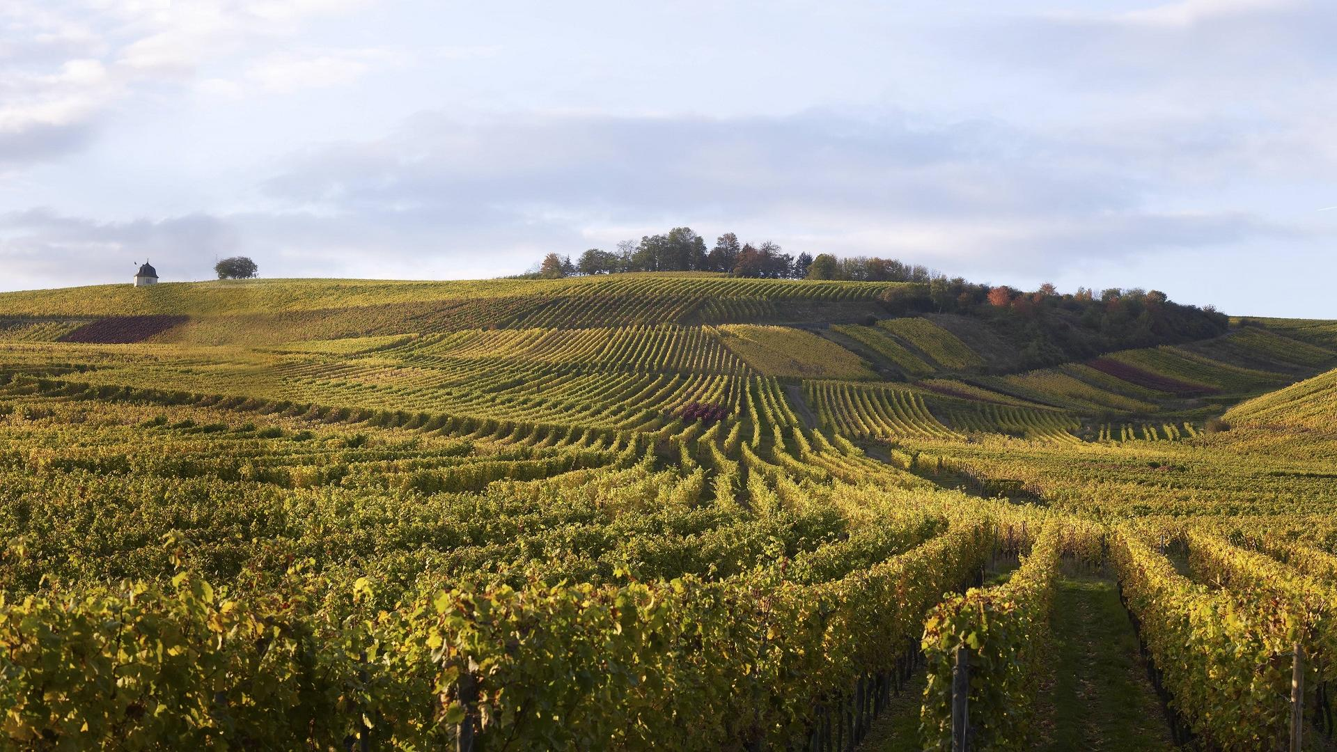 Hattenheim Weinanbau