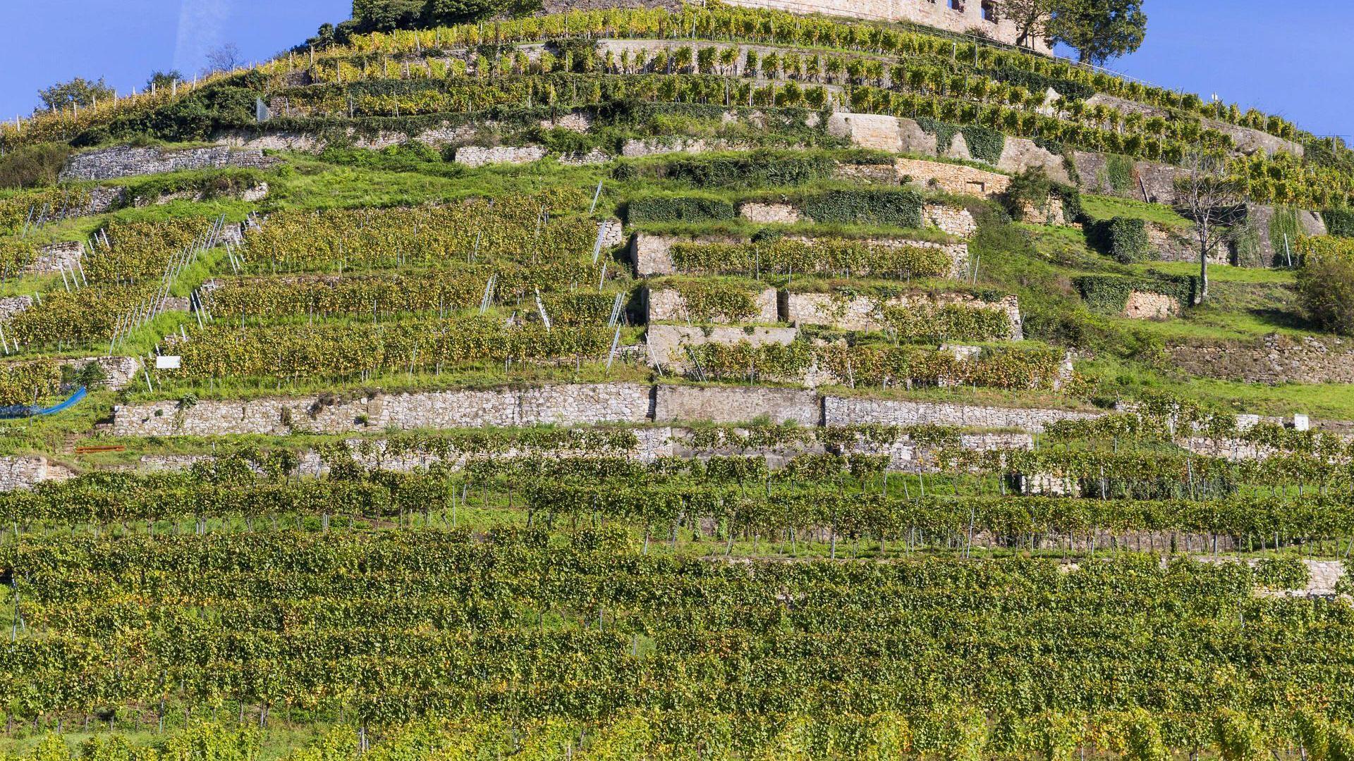 Staufen Weinwanderweg