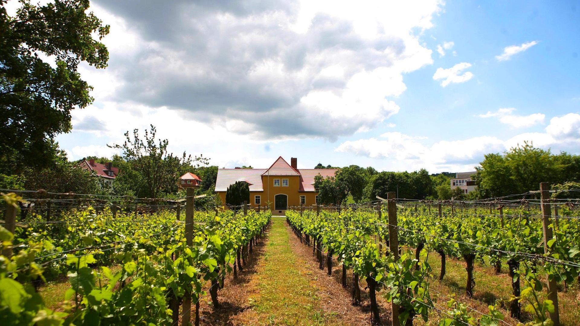 Weinmeile Weinwanderung