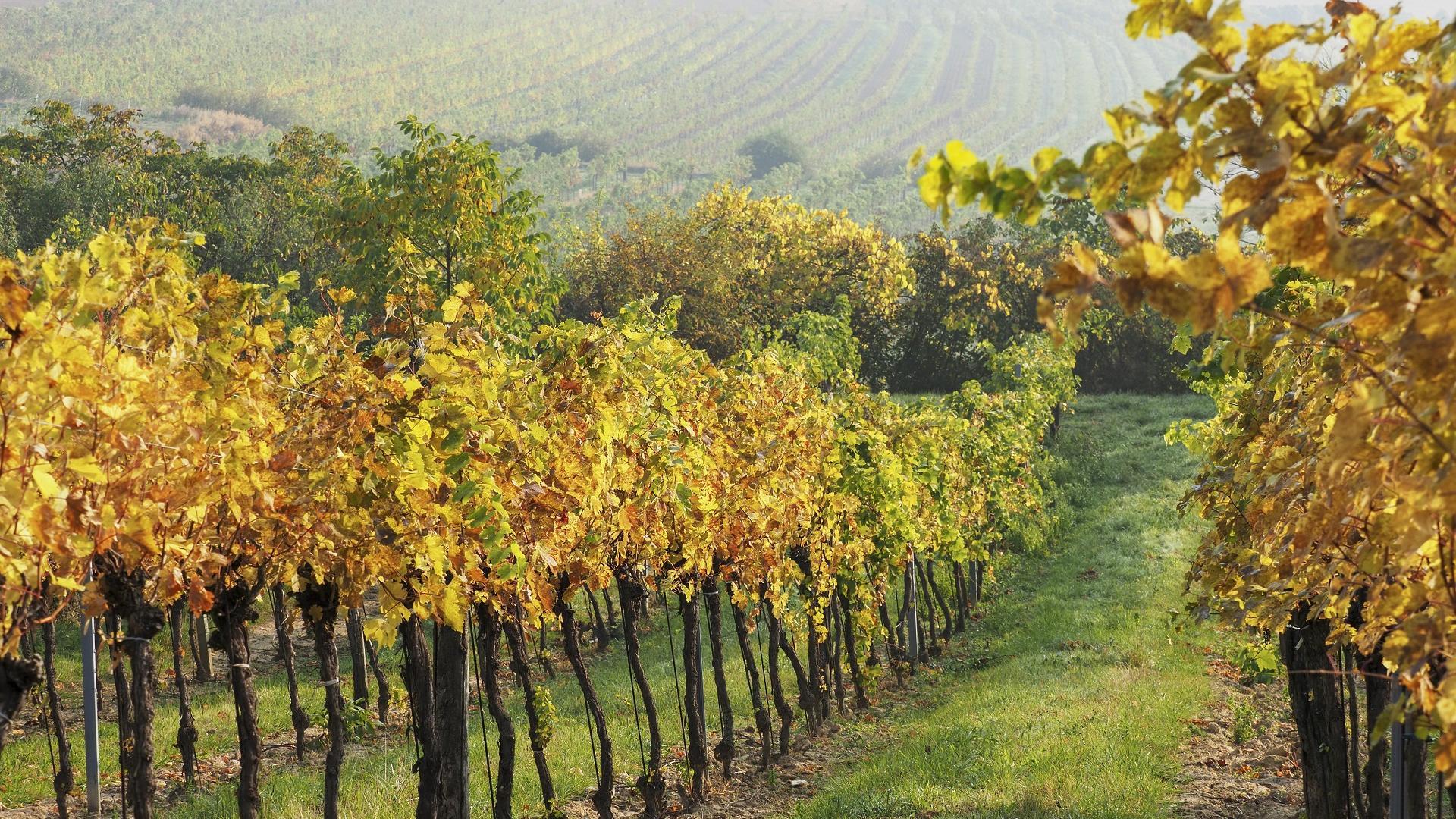 Wein Berge Wandern