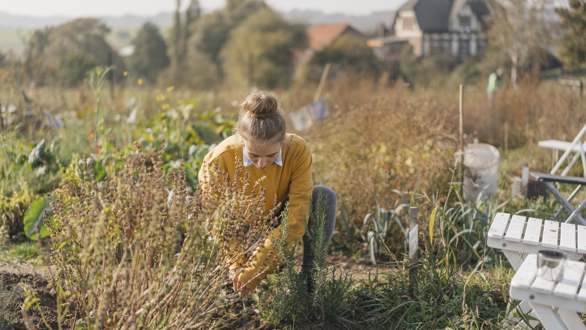Garten Arbeit Frau Natur