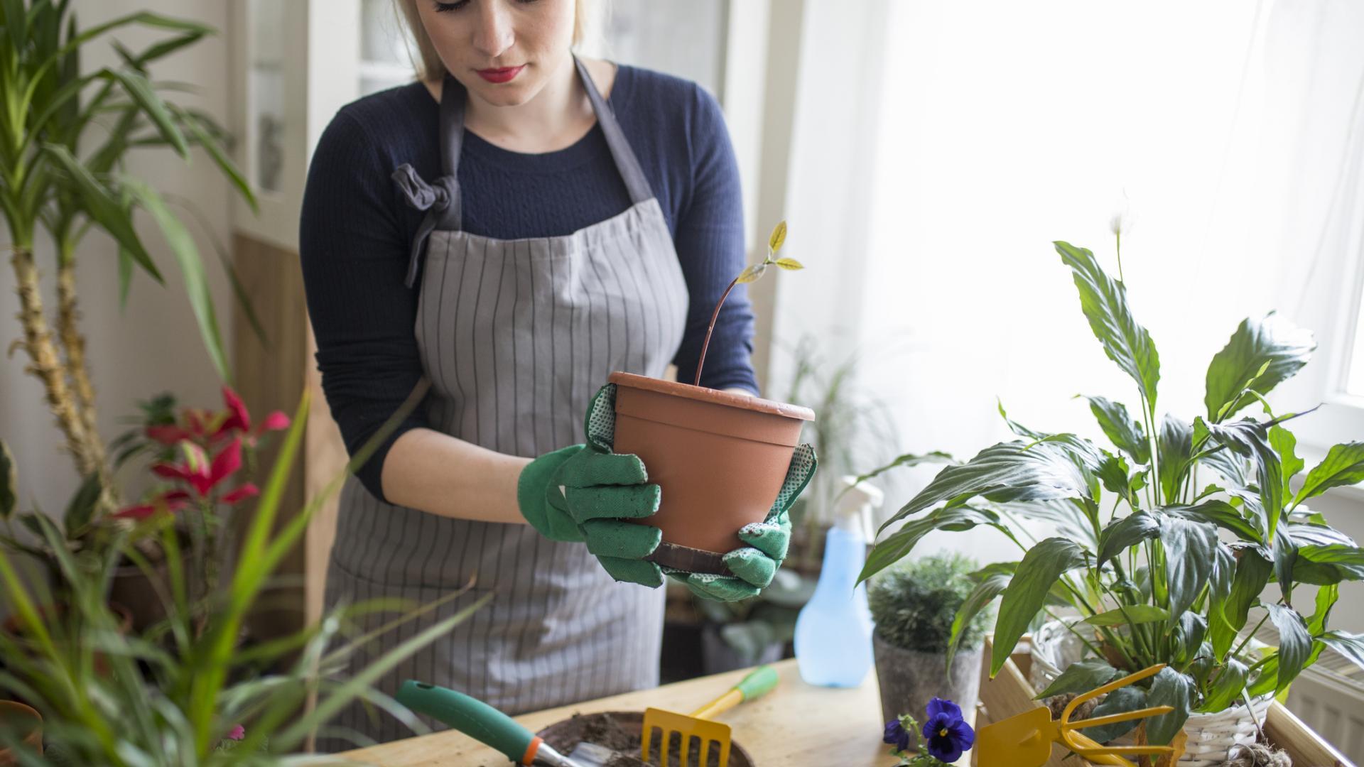 same einpfanzen garten gartenarbeit zimmerpflanzen