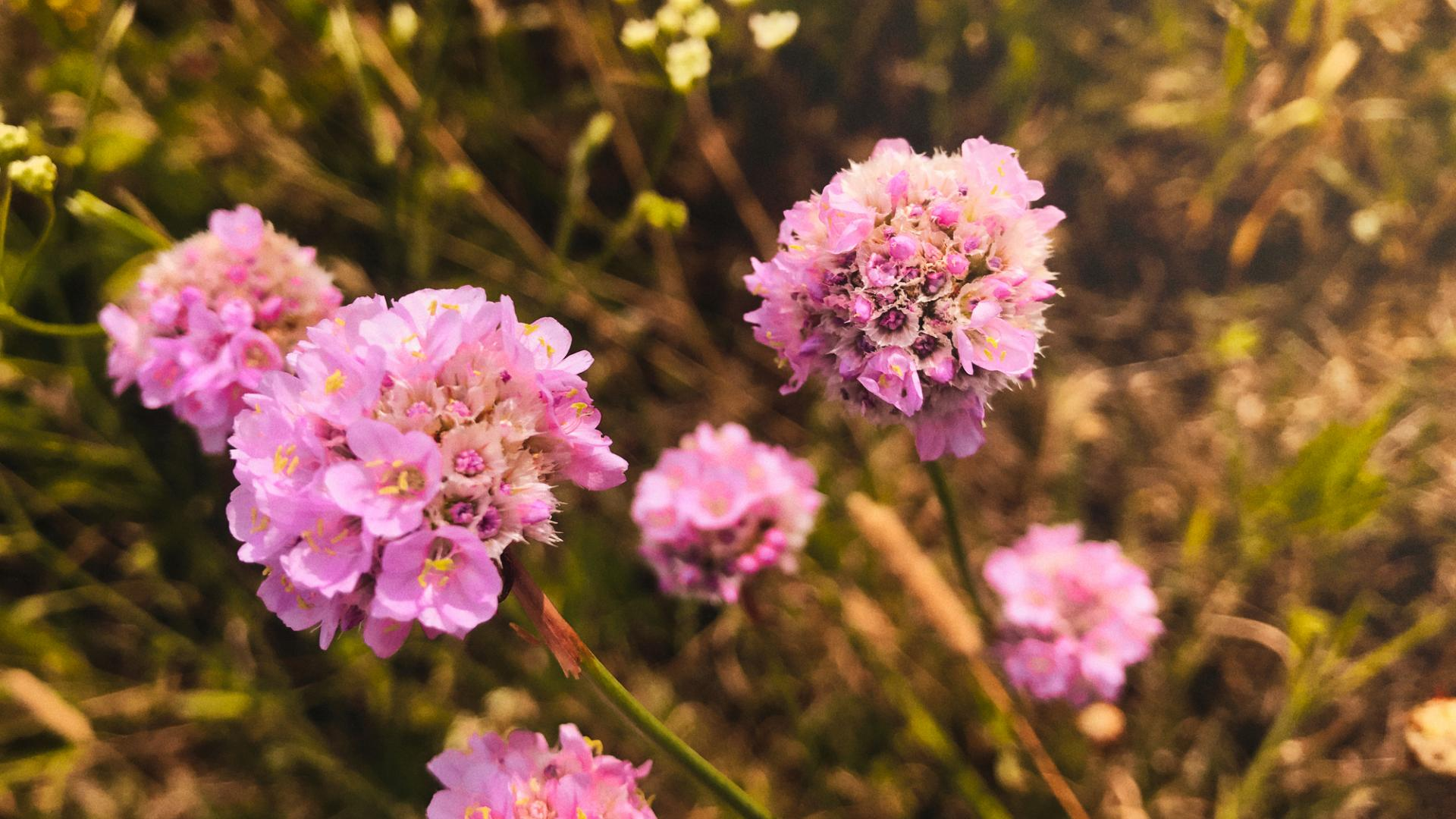 Blume Pollen