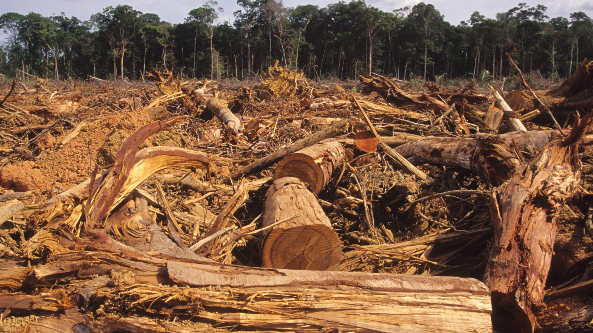 Amazonas Regenwald wird abgeholzt und Coronavirus lenkt davon ab