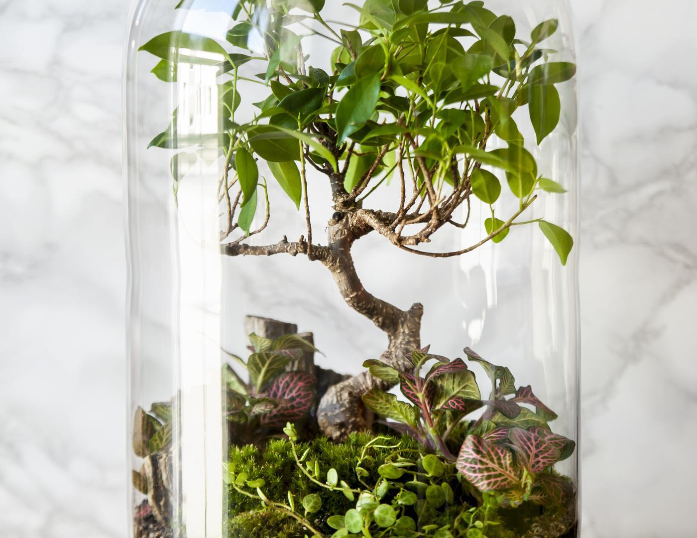 Garten im Glas Bonsai Pflanze