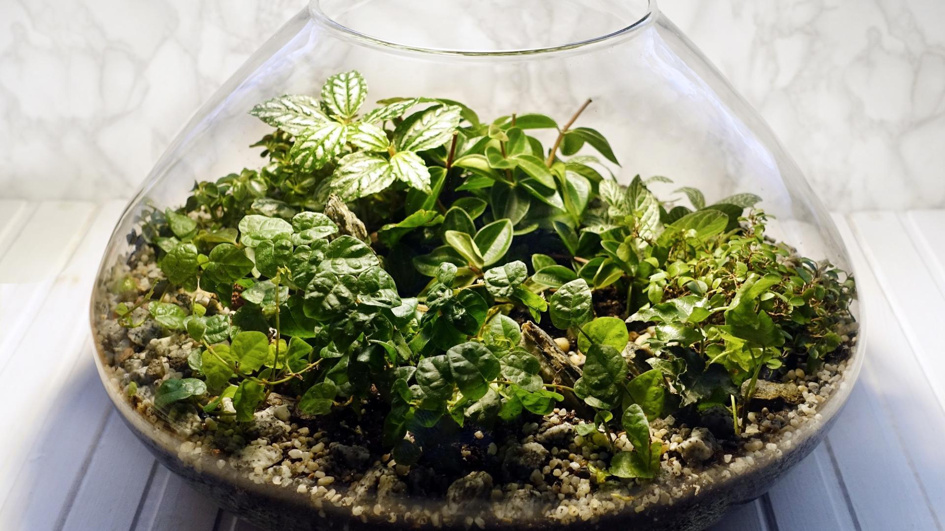 Garten im Glas Pflanze