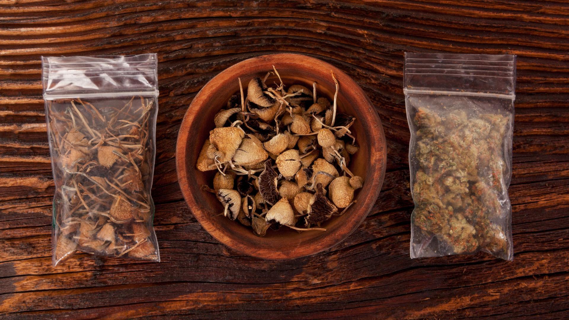 Pilze Psylocibin Magic Mushrooms