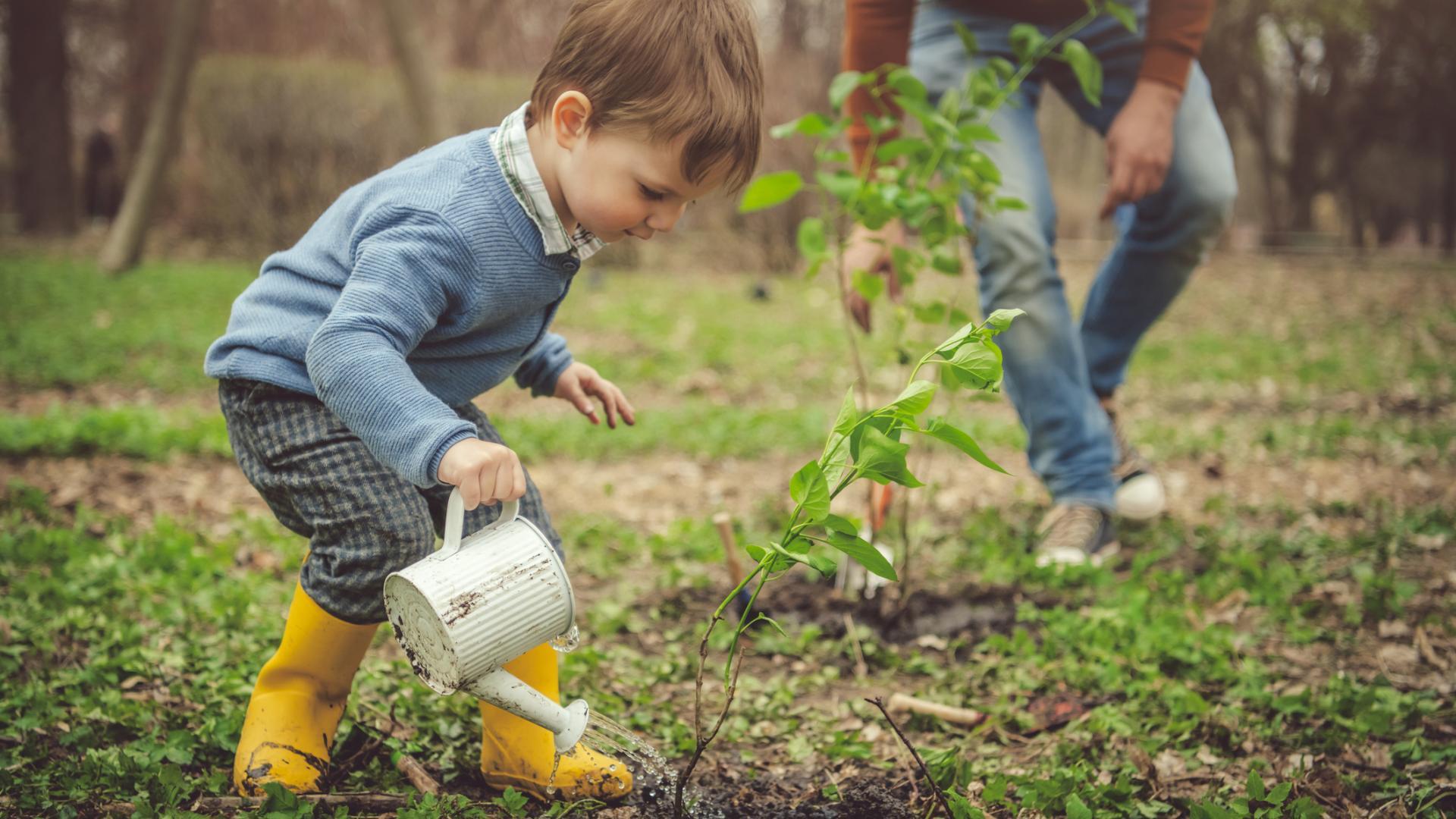 Kleiner Junge gießt Pflanze