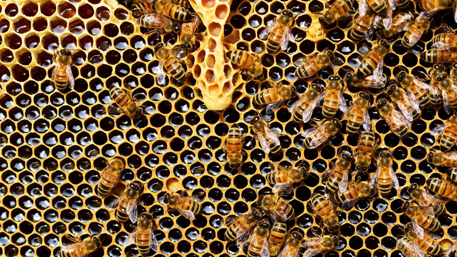 Bienen Wabe Honig