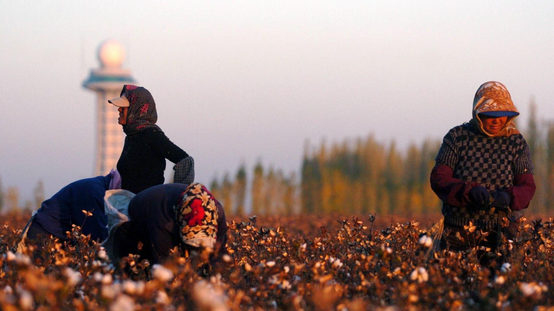 Zwei Frauen arbeiten auf einer Baumwollplantage.