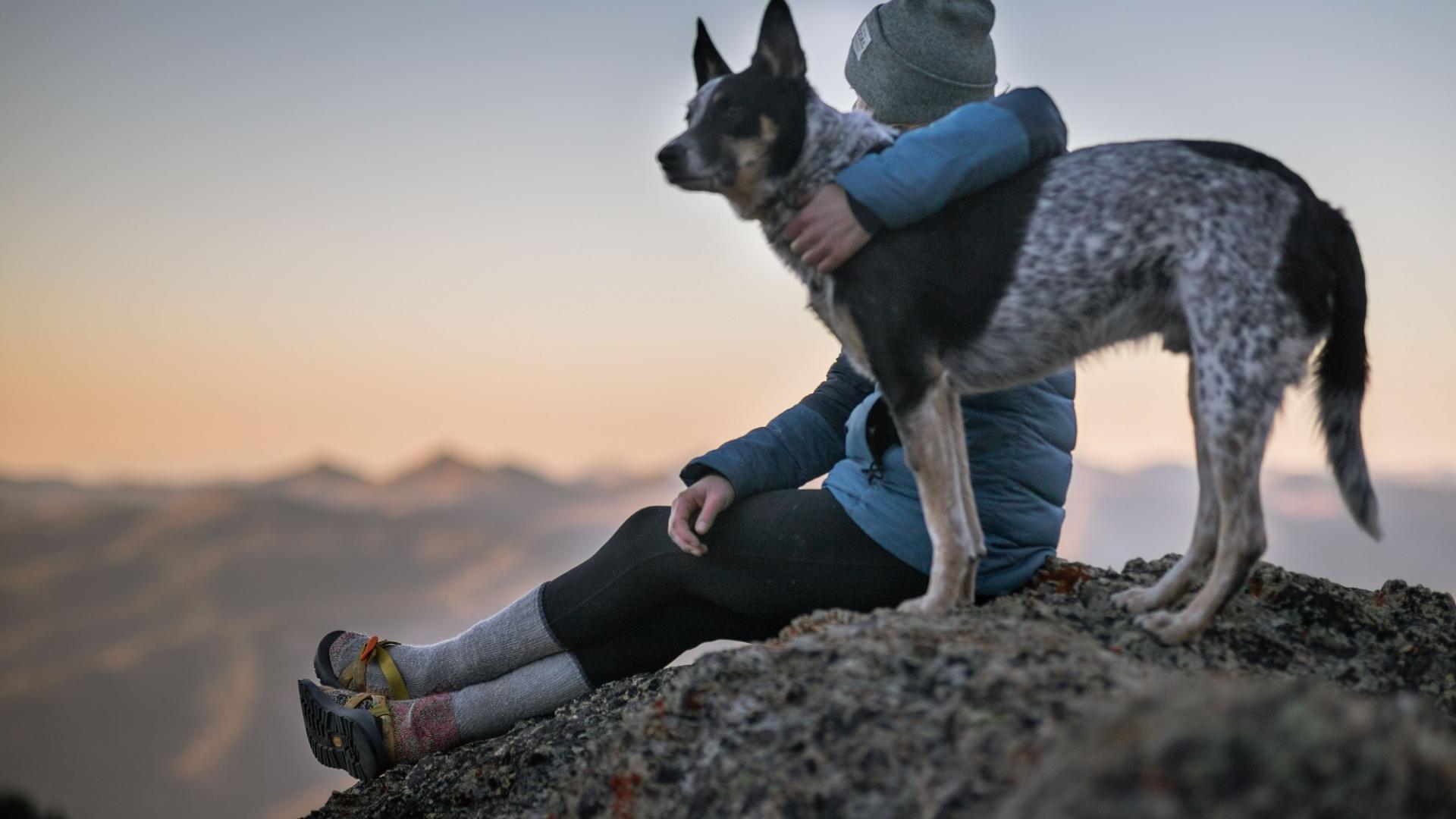 Online Dating Maschen, Dogfishing, Hund