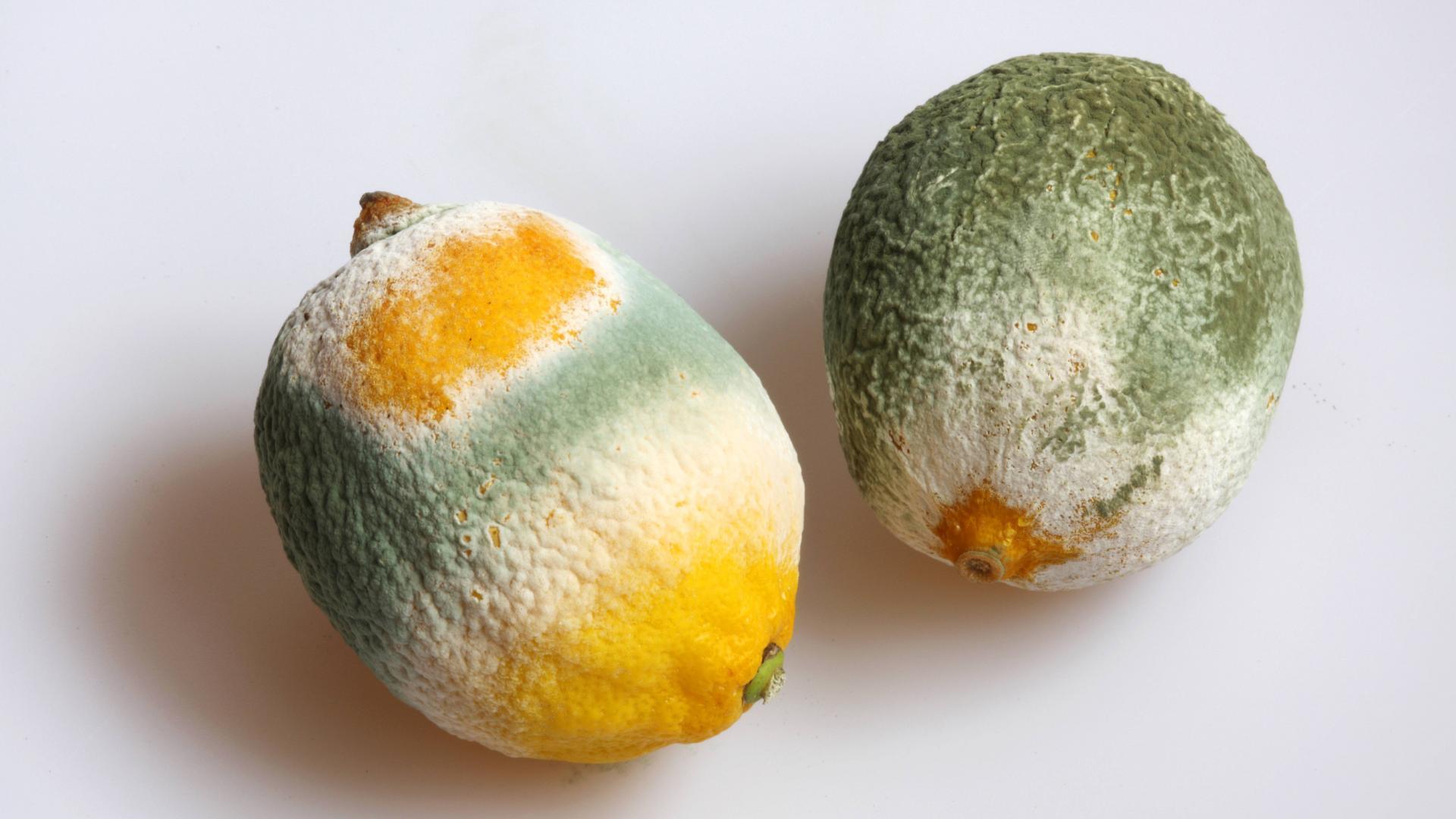 Schimmel an Obst