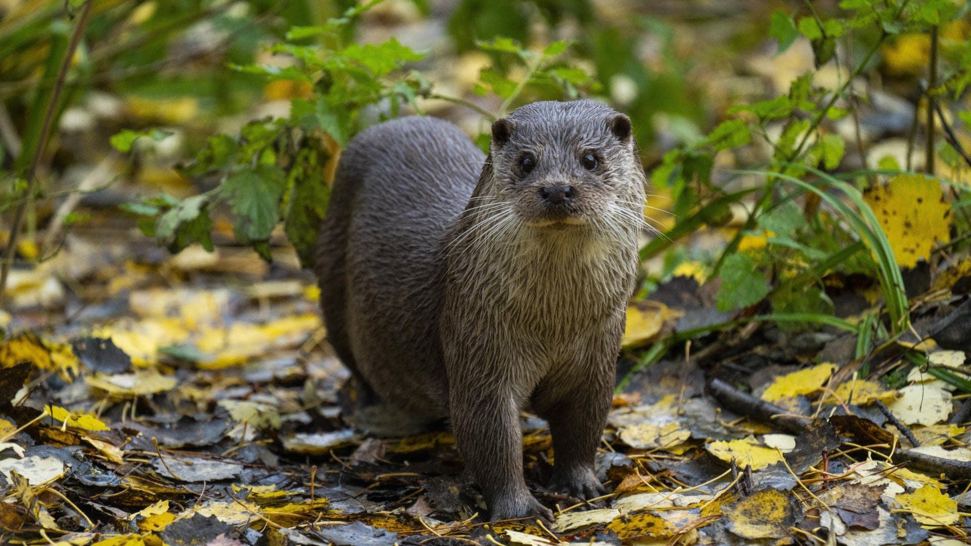 Otter Tier des Jahres