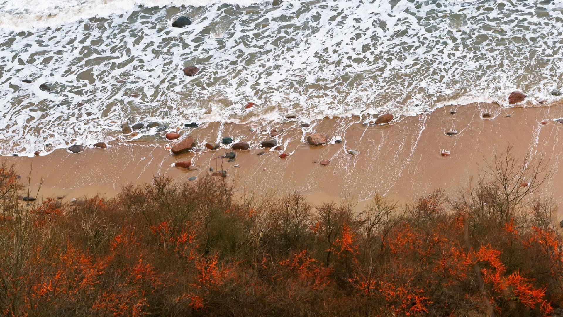 Sanddorn, Meer
