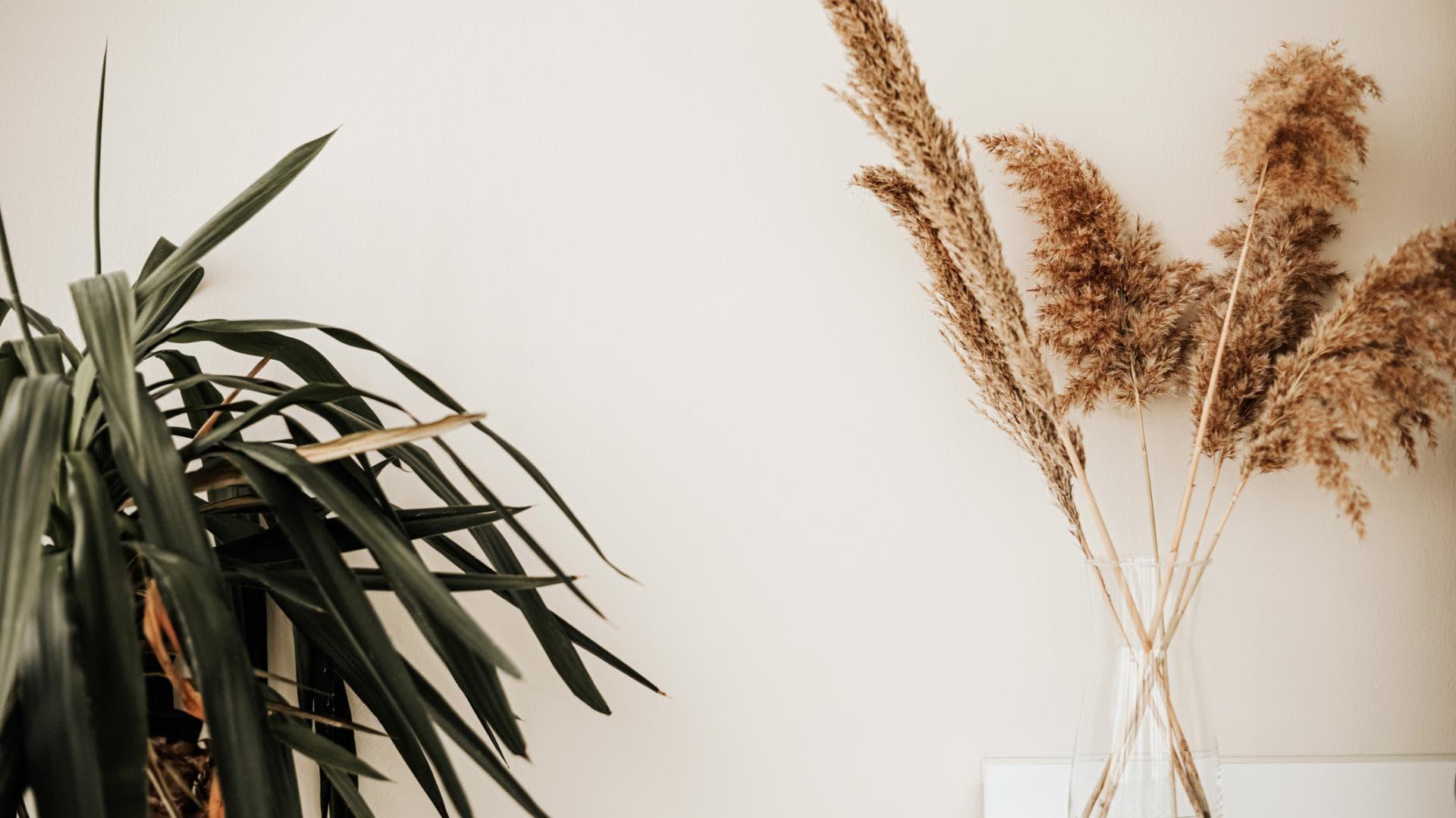 Pflanzen, Blumen, Deko