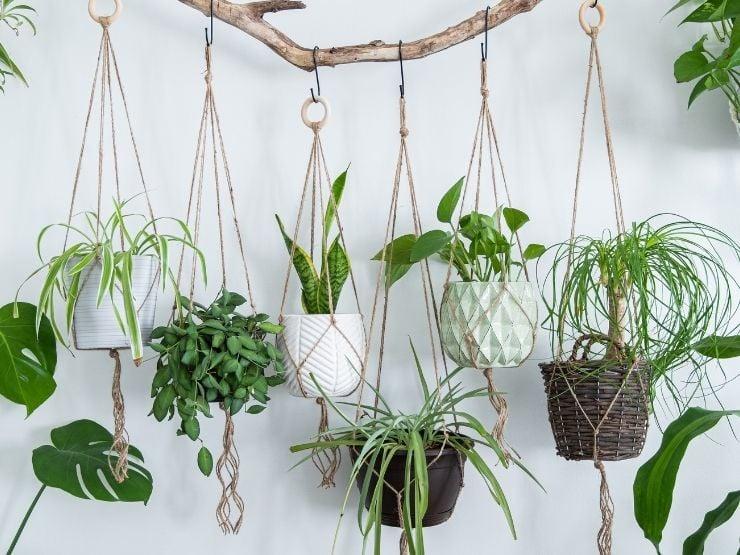 blumenampel hängende pflanzen boho grün