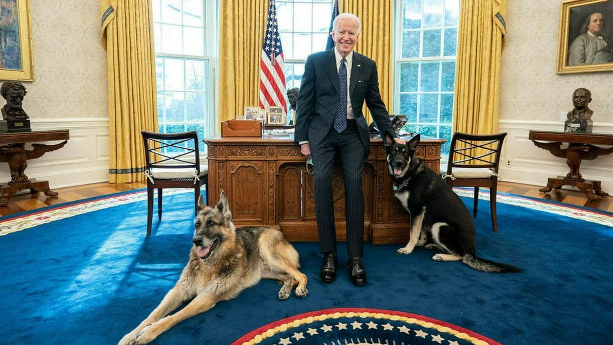 Joe Biden mit seinen Hunden im Weißen Haus. © imago images/ZUMA Wire