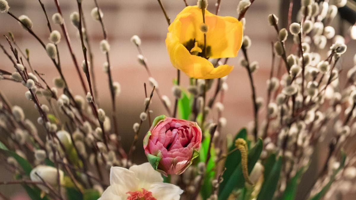 Palmkätzchen und bunte Tulpen dürfen im Osterstrauß nicht fehlen. (Symbolbild). © Naletova Elena/Shutterstock