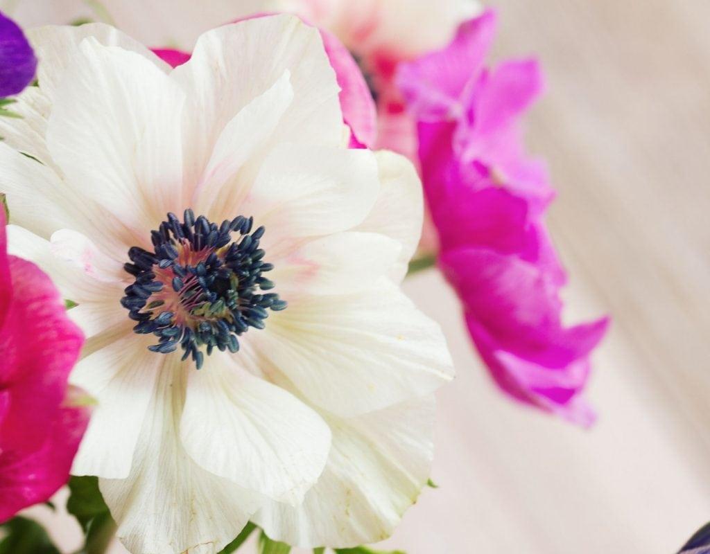 Sternzeichen Blume