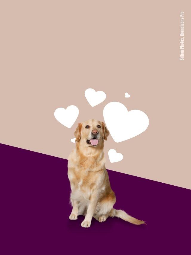 Liebt mich mein Hund?