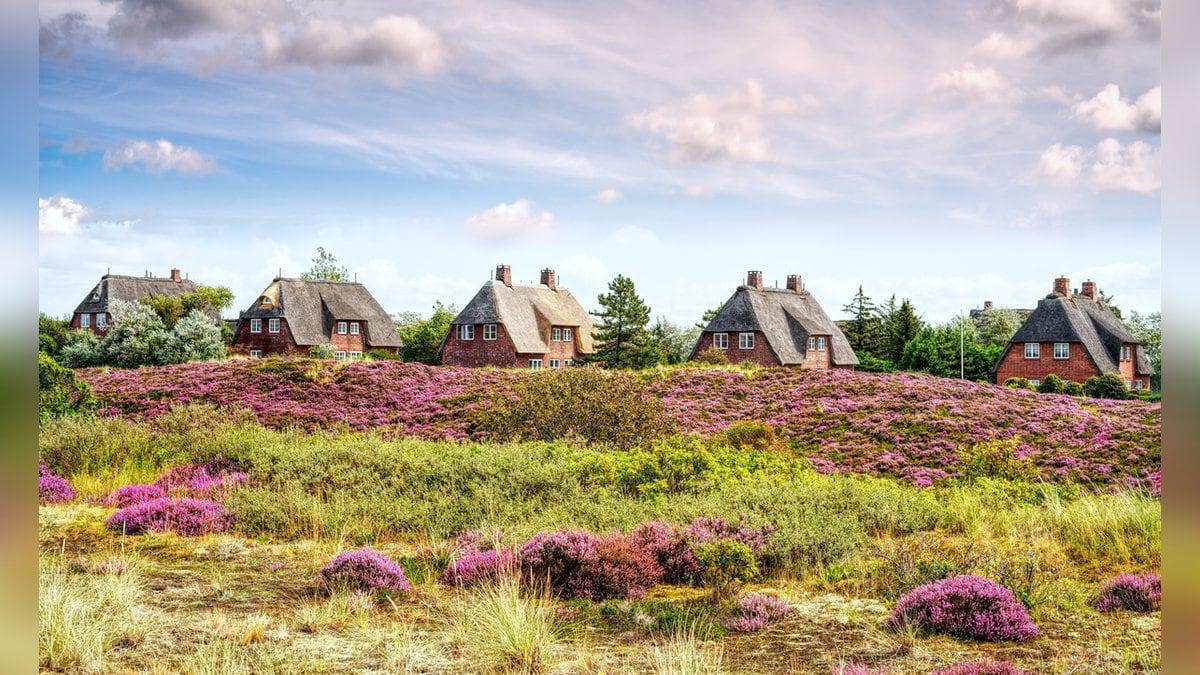 Prägen den Charme der Insel Sylt: Reetdachhäuser. © K I Photography/Shutterstock.com