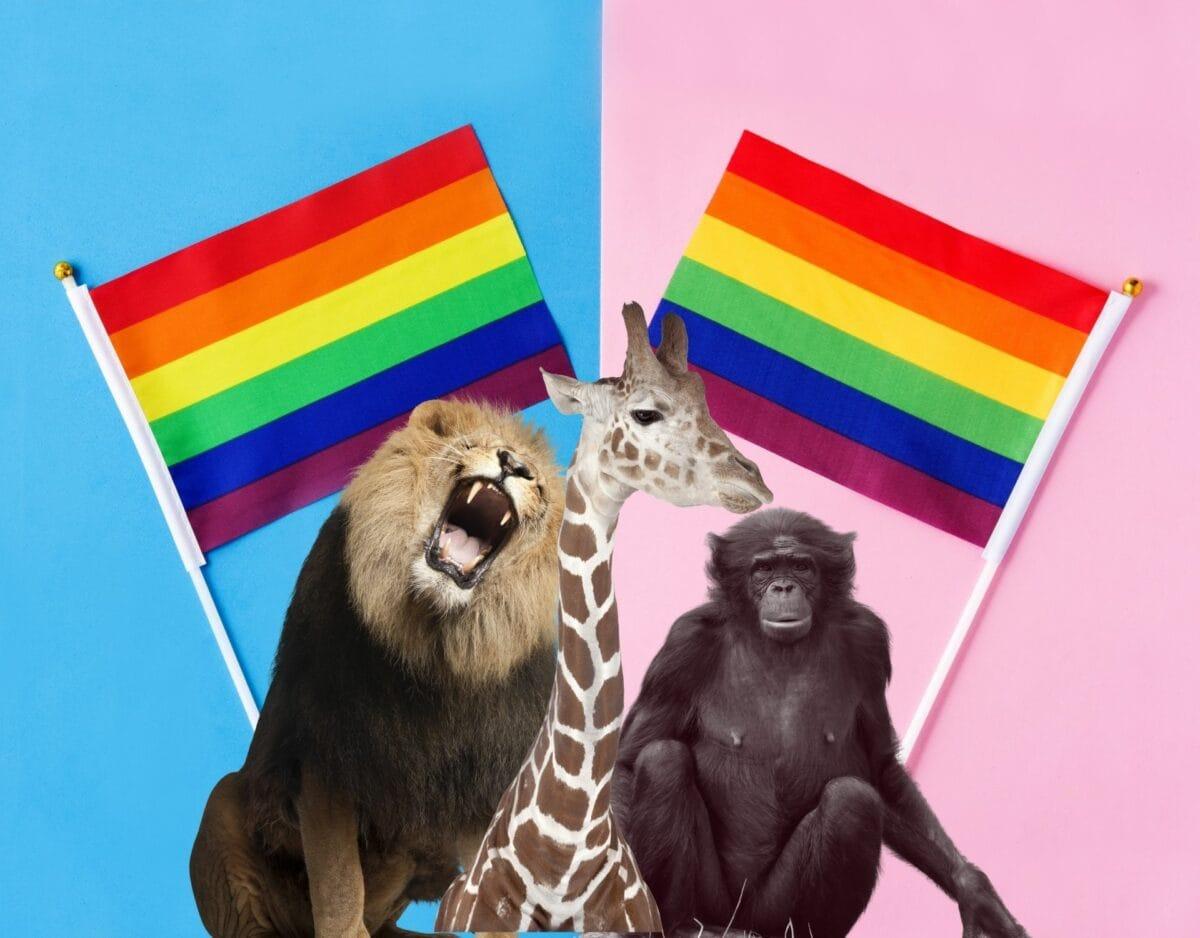 Tierarten schwul