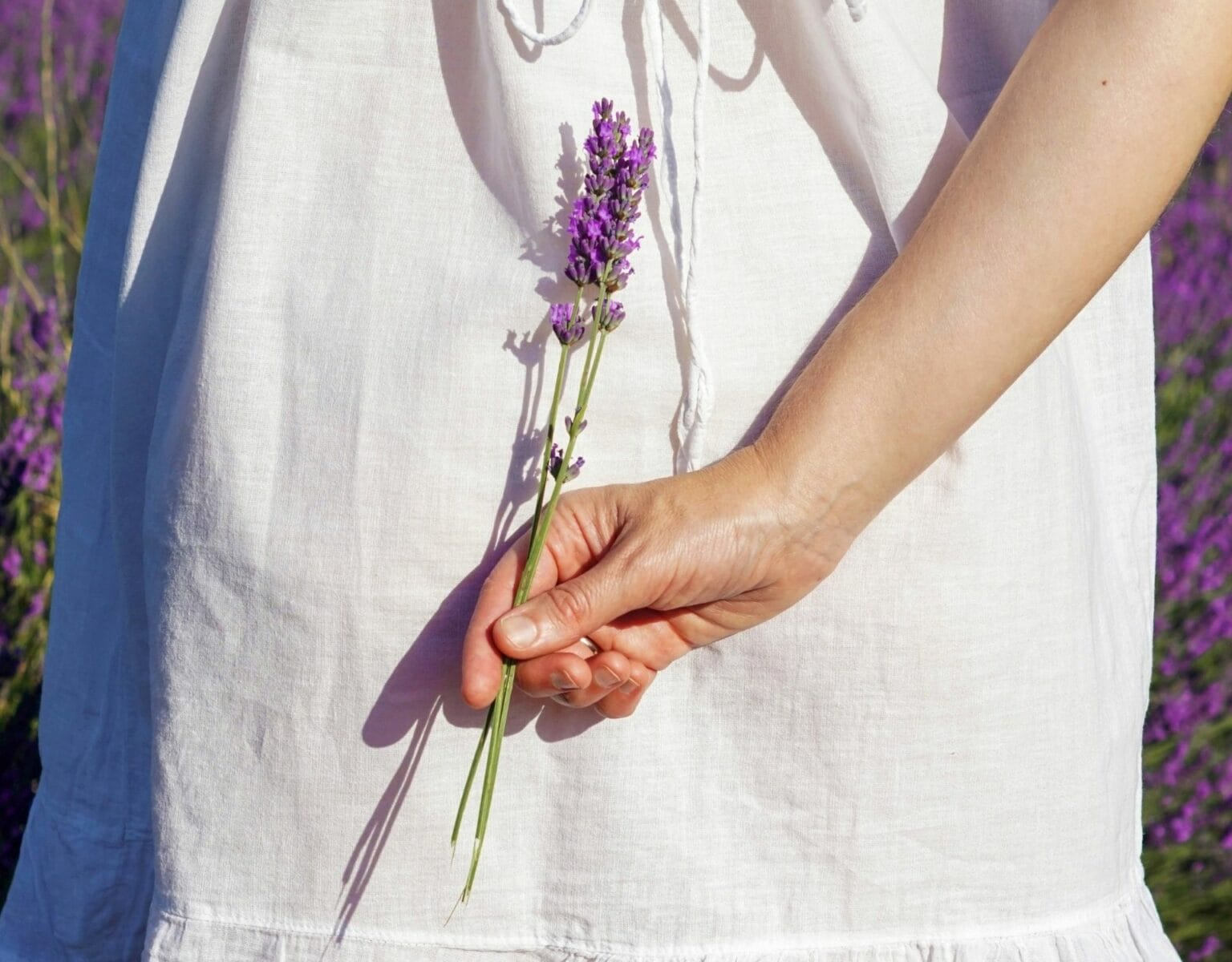 Lavendel & Rauch: Wespen fernhalten klappt mit diesen 10 ...