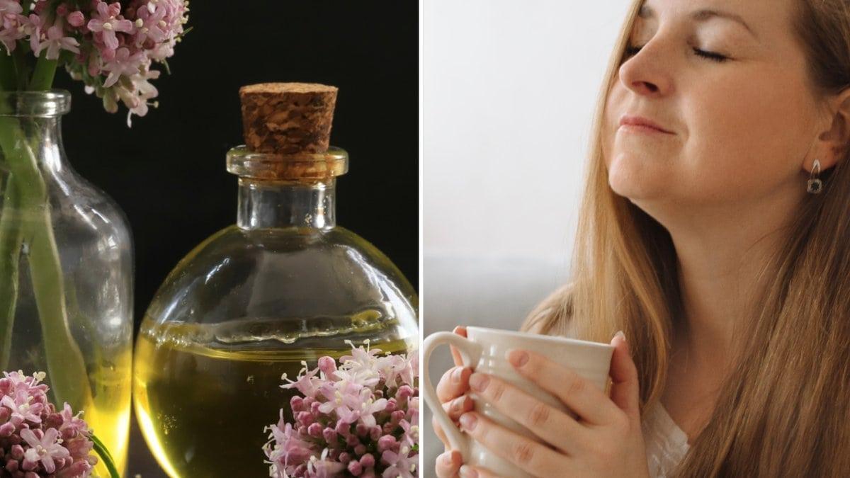 Die Baldrianwurzel lässt sich ganz einfach zu Tee verarbeiten.. © Ievgeniia Shugaliia/Shutterstock.com / ibrahim kavus/Shutterstock.com
