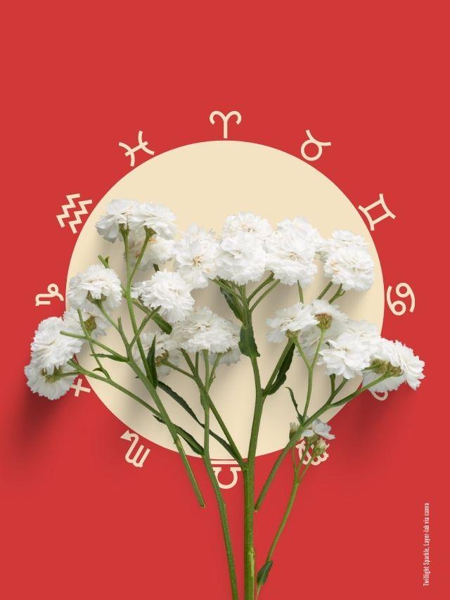 Welche Blume passt zu deinem Sternzeichen?